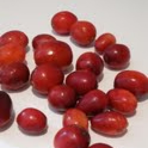 Thanksgiving Week: What's So Great About Cranberries?