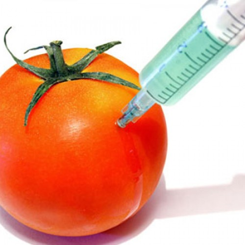 What's So Bad About…Genetically Modified Foods