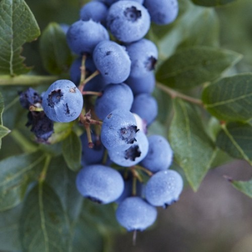 Best of 2011: Blueberry Picking Field Trip