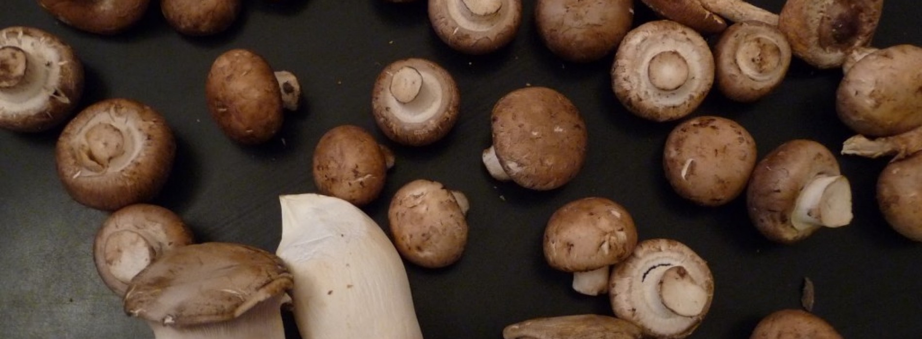 What's So Great About Mushrooms?