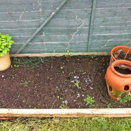 Lisa's Letters Home: How Does My Garden Not Grow?
