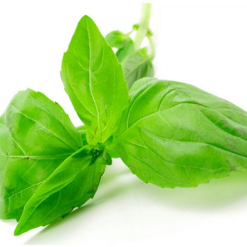 What's So Great About Basil?