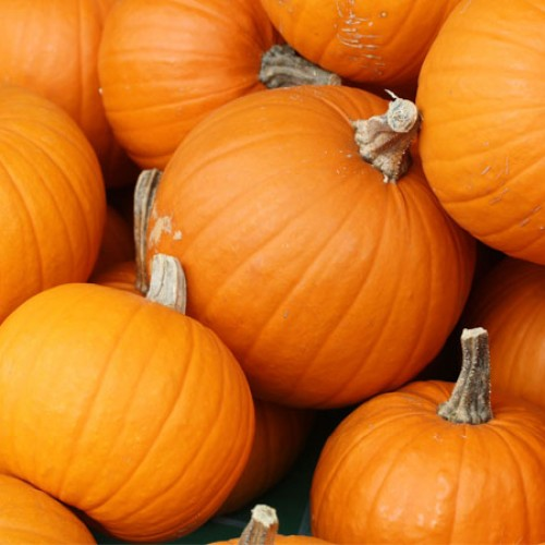 What's So Great About Pumpkin?
