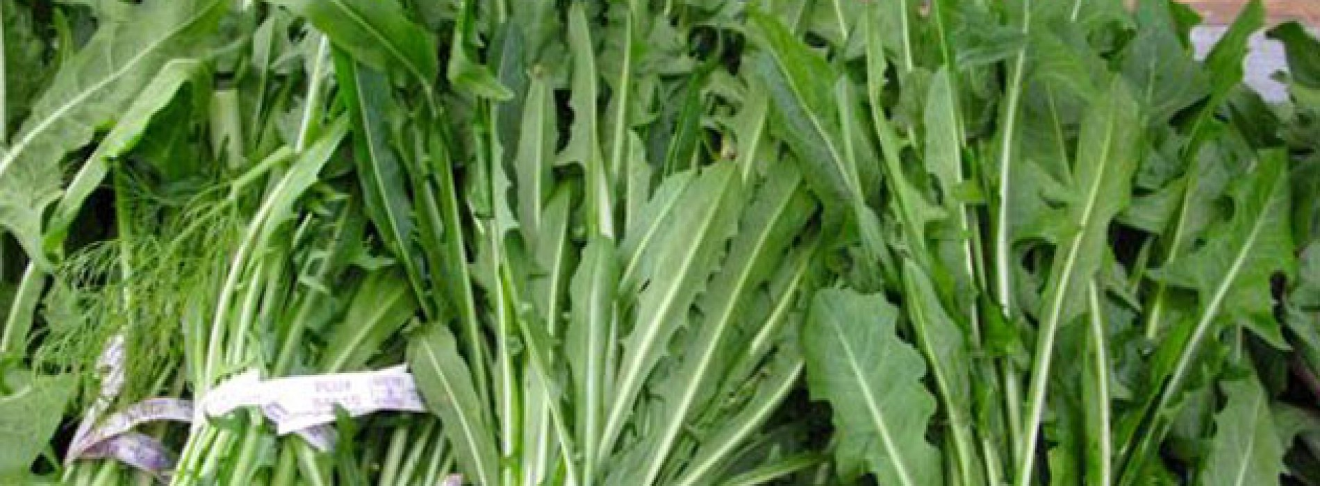 What's So Great About Dandelion Greens?
