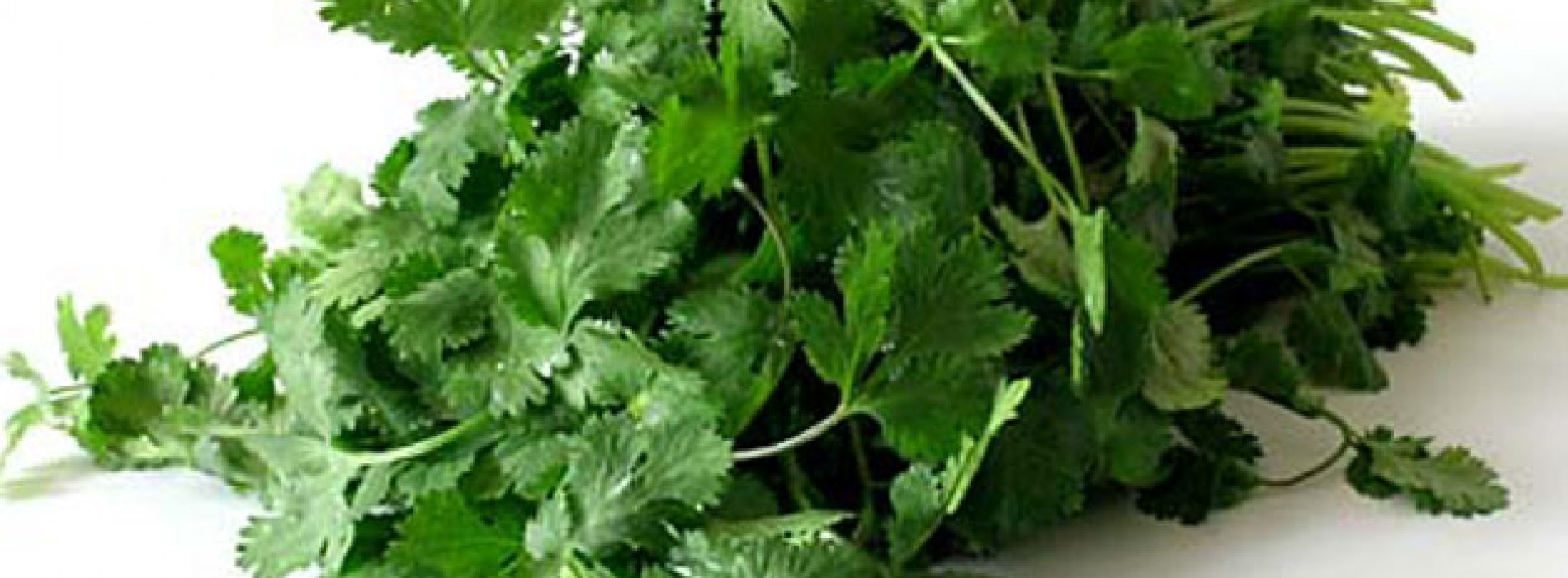 What's So Great About Coriander?