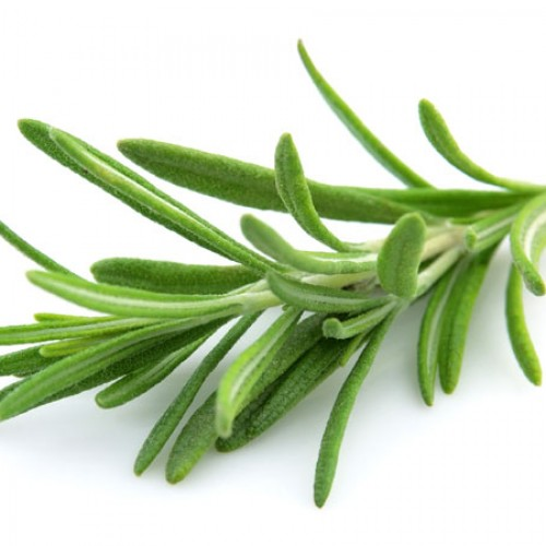 What's So Great About Rosemary?