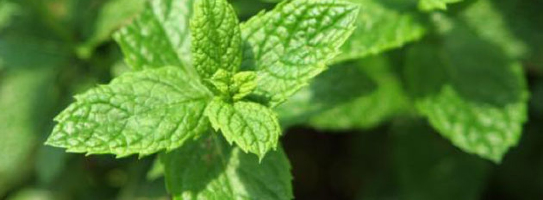 What's So Great About Mint?