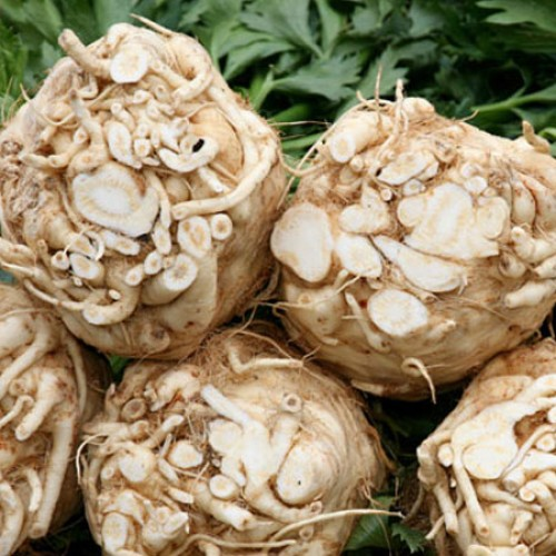 What's So Great About Celery Root?
